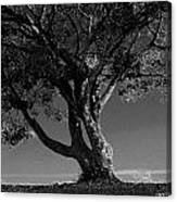 The Lone Tree Black And White Canvas Print
