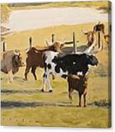 The Longhorn Cows Canvas Print