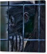 The Look Of Captivity Canvas Print