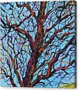The Looking Tree Canvas Print