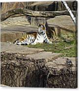 The Lounging Tiger 2 Canvas Print