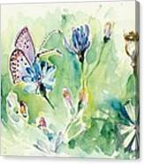 The Love Between Butterfly And Chicory Canvas Print