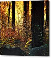 The Magic Of The Forest  Canvas Print