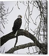 The Majestic Eagle Canvas Print