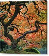 The Maple Tree At Portland Japanese Garden Canvas Print