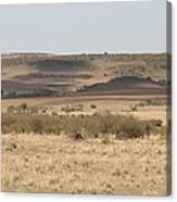 The Mara Plains Canvas Print
