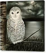 The Marsh At Night Canvas Print