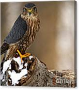 The Merlin Canvas Print