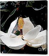 New Orleans Metamorphous Of The Southern Magnolia Spring Equinox In Louisiana Canvas Print