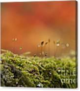 The Miniature World Of Moss  Canvas Print
