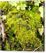The Miniature World Of The Moss Canvas Print