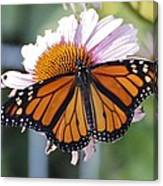The Monarch Landed Canvas Print
