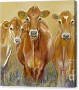 The Morning Moo Canvas Print