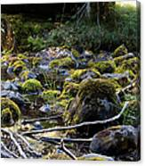 The Moss In The River Stones Canvas Print