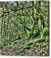 The Mossy Creatures Of The  Old Beech Forest 5 Canvas Print