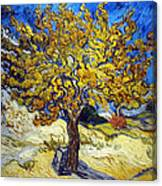 The Mulberry Tree Canvas Print
