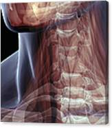 The Muscles Of The Neck Canvas Print