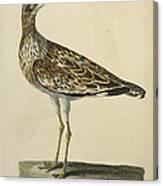 The Norfolk Plover Canvas Print