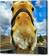 The Nose Knows Canvas Print