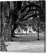 The Oaks Of Audubon Park Canvas Print