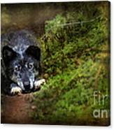 The Old And Not Too Bad Wolf Canvas Print