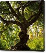 The Old Mango Tree Canvas Print