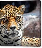 The Ole Leopard Don't Change His Spots Canvas Print