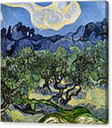 The Olive Tree Canvas Print