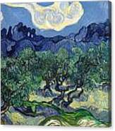 The Olive Trees Canvas Print