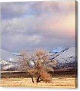 The Only Tree Canvas Print