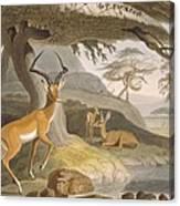 The Pallah, 1804-05 Canvas Print