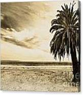The Palm Swayed As The Storm On The Ocean Blew In Canvas Print