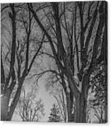 The Park In Black And White Canvas Print