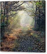 The Paulinskill Trail By James Figielski Canvas Print