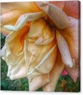 The Peach Rose Canvas Print