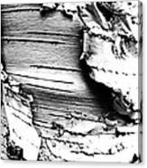 The Peeling Birch Canvas Print