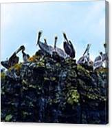 The Pelican Dance Canvas Print