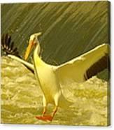 The Pelican Lands Canvas Print