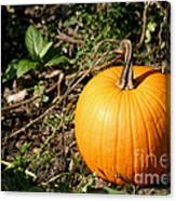 The Perfect Pumpkin In The Patch Canvas Print