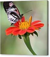 The Piano Key Butterfly Canvas Print