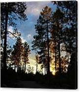 The Pines At Sunset Canvas Print