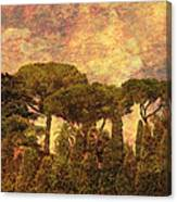 The Pines Of Rome Canvas Print