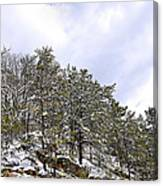 The Pines Canvas Print