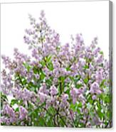 The Pink Of Spring - Featured 2 Canvas Print