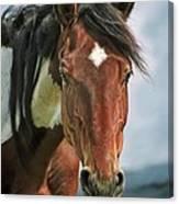 The Pinto Horse Portrait Canvas Print