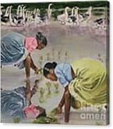 The Planting Canvas Print