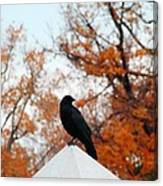Crow Found The Perfect Pyramid Point Canvas Print