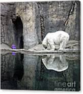 The Polar Bear And The Purple Chair Canvas Print