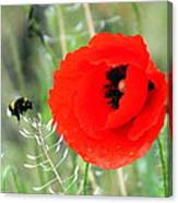 The Poppy And The Bee Canvas Print