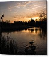 The Posing Goose Canvas Print